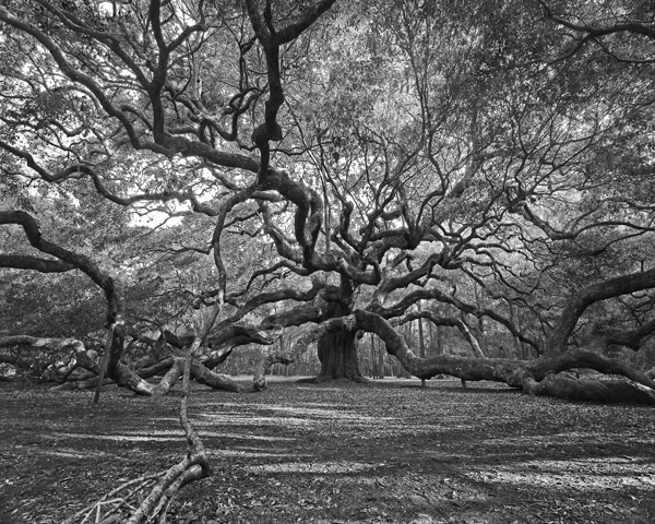 Angel Oak BW