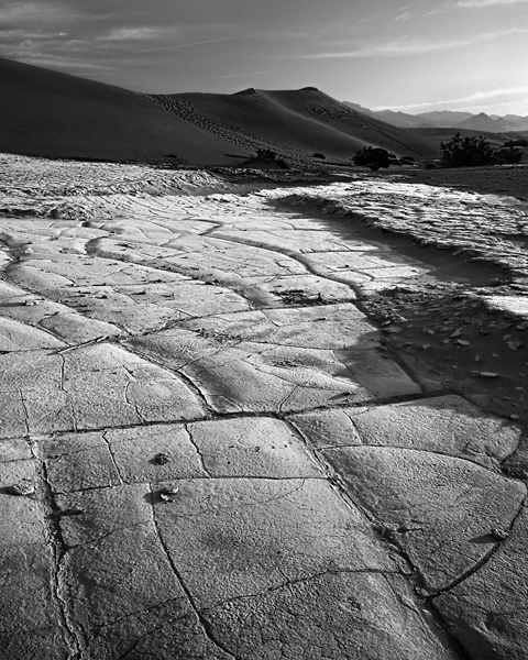Cracked Desert Floor