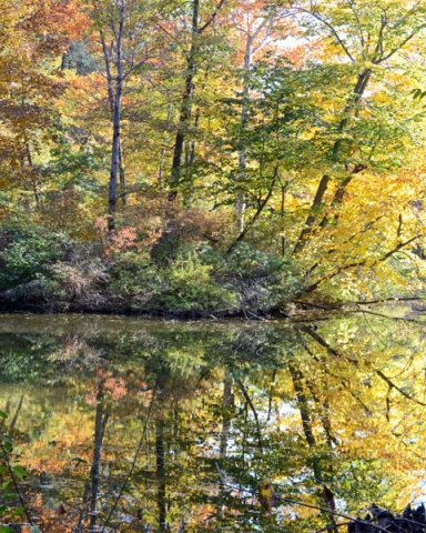 Small Island Reflection