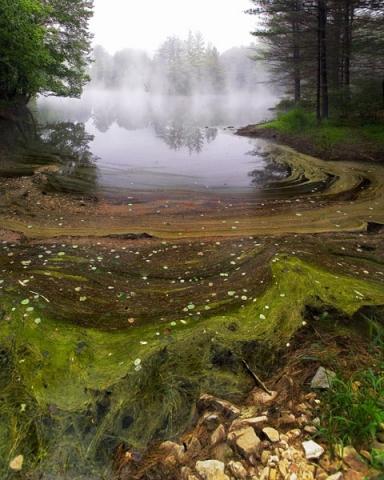 Foggy Pond Debris