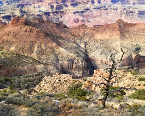 Lonely Tree in Canyon
