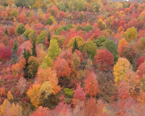 Majesty of Fall